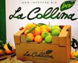 Cassetta Mix di agrumi biologici della sicilia